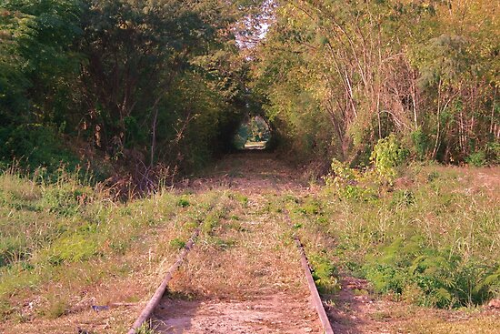 Train Tree Tunnell by Chelei
