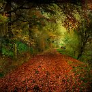 The Red Carpet. by Irene  Burdell