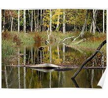 Beaver Pond- Eels Creek Provincial Park Poster
