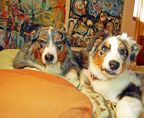 Dogs living the good life! by Diane  Kramer