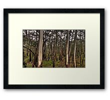 Patterns Of The Bush - Along A Country Road, Blue Mountains Sydney - The HDR Experience Framed Print