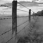 Barbed - Blue Ridge Parkway by David Clayton