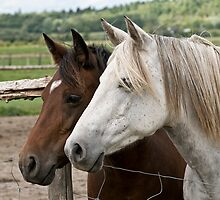 Abigail & Daisy - Silver Creek Ranch, Ottawa, Ont by Tracey  Dryka