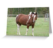 Lucy - Silver Creek Ranch, Ottawa, On Greeting Card