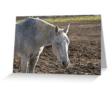 A much needed rest - Silver Creek Ranch, Ottawa, Ont Greeting Card