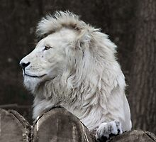 Animal Portraits V - The White Lion by Britta Döll
