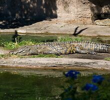 Animal Kingdom Crocodile by stillblue