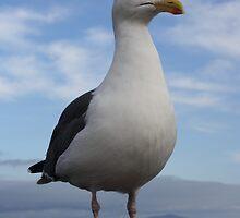 Admiral Seagull by Corri Gryting Gutzman