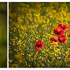 Poppy diptych by Rose Atkinson