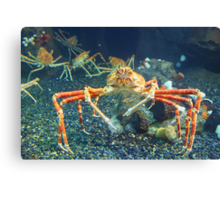 Crab World Canvas Print