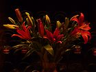 Dramatic Red Lilies by Margie Avellino