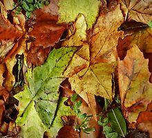 leaf fall by dinghysailor1