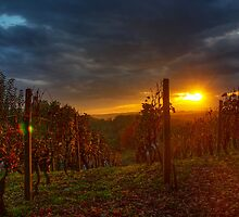 Sunset in the Vineyard by Boris Frkovic