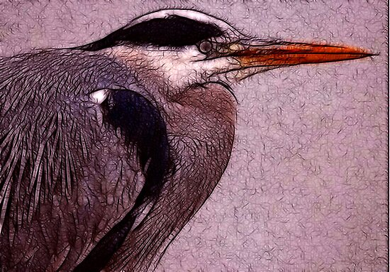 Grey Heron by Trevor Kersley
