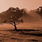 Canberra Morning - A frosty morning in Canberra by Brett Norman