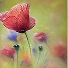 Poppies. by jan farthing