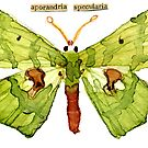 Aporandria Specularia (Large Green Aporandria Moth) by Carol Kroll