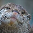 Proud To Be A Otter ! by jdmphotography