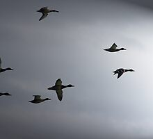 Small flock by Al Williscroft