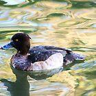black ducky  by xxnatbxx