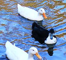 3 little duckies swimming on a lake by xxnatbxx