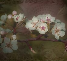 Cherry Blossom Time by Linda Cutche