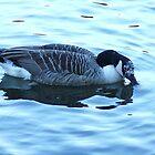 beautiful goose by xxnatbxx
