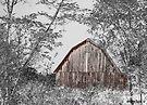 The Red Barn by Marcia Rubin
