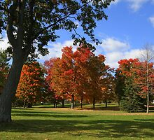 Fall At Lake Ontario Park by AliceMc