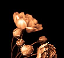 """Sepia Rose"" by Husky"