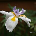 Flower in the Spring by Robyn J. Blackford by aussiebushstick