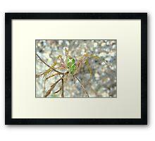 Green Lynx Spider Framed Print