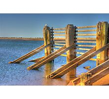 Seagull sitting on Tide fence Photographic Print