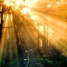 Morning Journey by Ern Mainka