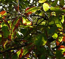 Leaves in May, Tweed River, NSW by aussiebushstick
