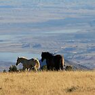 Two Pryor Mountain Wild Horses Enjoying the View by sandyelmore