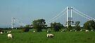 Sheep & the old Severn bridge, Bristol, UK by buttonpresser