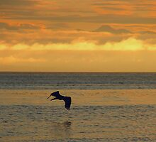 Sunrise and a heron by Al Williscroft