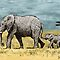 Elephant With Baby by SRolfe