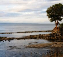 Arbutus Tree...Strait of Georgia by DThiessen