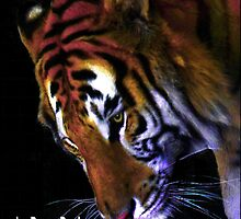 Tigers - E-Book by Dawn B Davies-McIninch