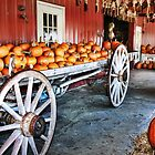 Pick your Pumpkin by Nadya Johnson