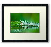 Water Spike  Framed Print