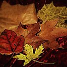 Autumn Leaf Collage by Linda Miller Gesualdo