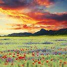 A beautiful day by Suzana Ristic