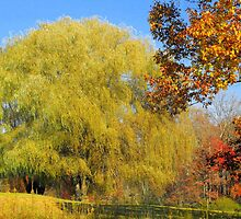 Autumn Willow by Stephanie Reynolds
