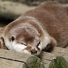 Sleepy asian otter by Joanne Emery