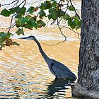 Blue Heron at Memorial Park by mltrue