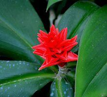 Huntington Gardens Red One by Tony Dempsey
