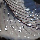 Raindrops on a Leaf by Dorothy Thomson